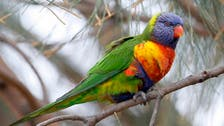Larger beaks, wings: Animals 'shape shifting' to survive climate change