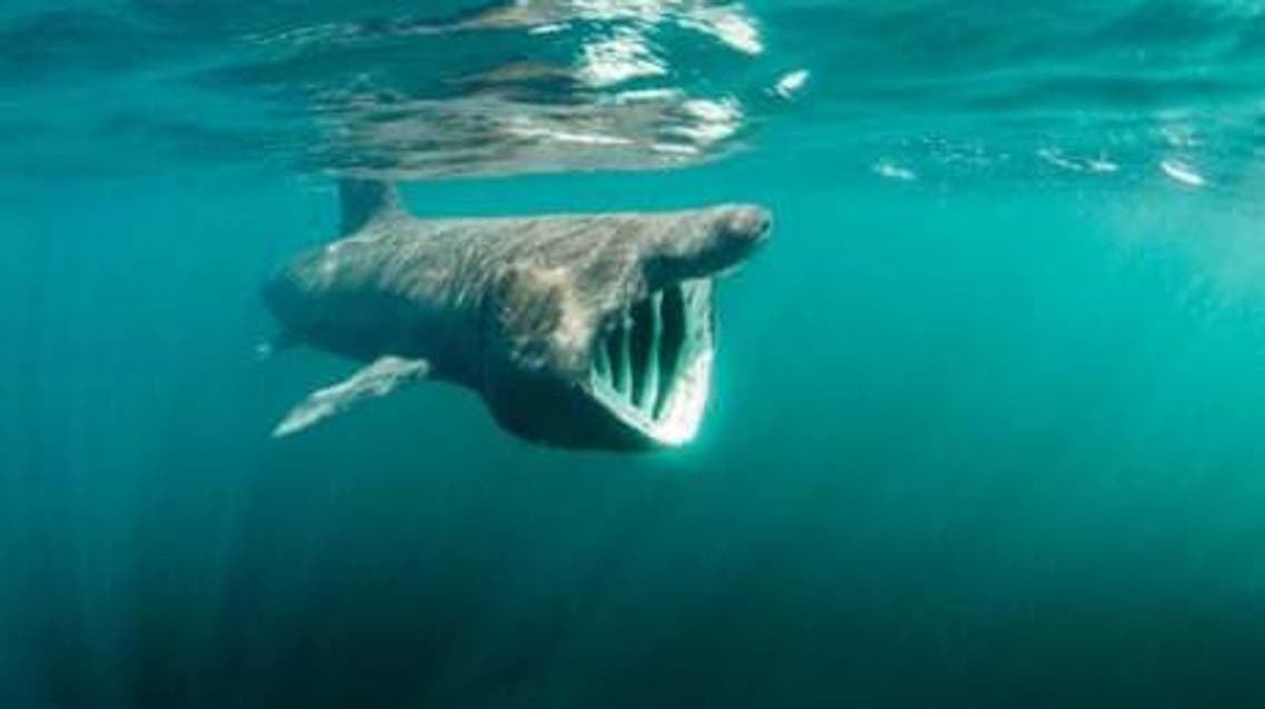 This 400-year-old shark is the oldest vertebrate on Earth