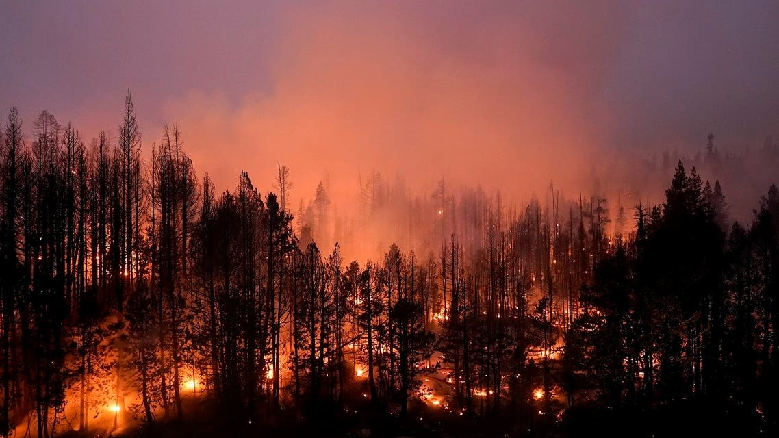 Trees scorched by the Caldor Fire smolder in Eldorado National Forest, California, Sept. 3, 2021. (AP)