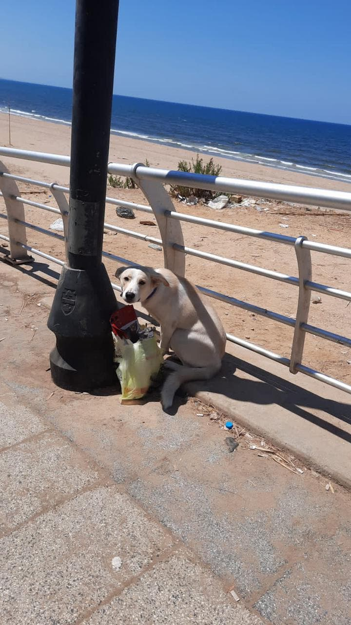Tied to a pole with her food in Ramlet el Bayda area (Image: Vanessa Ghanem)