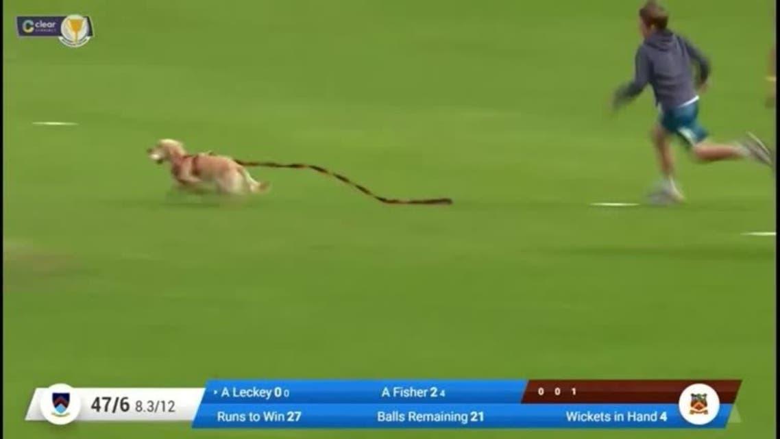 Cocker Spaniel puppy named Dazzle disrupts cricket match. (Screengrab)