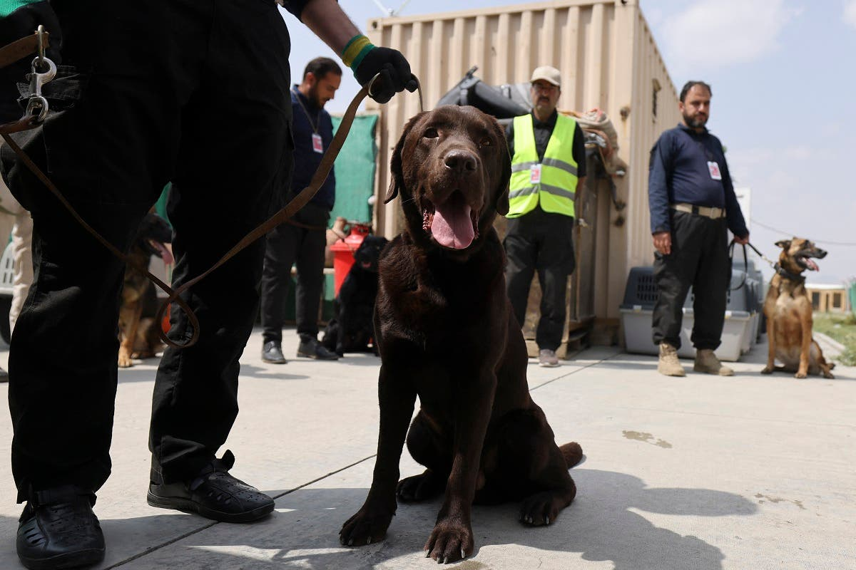 This picture taken on September 12, 2021, shows handlers training dogs which were left behind during last month's chaotic evacuations from Afghanistan, in a makeshift training center at the airport in Kabul. (AFP)