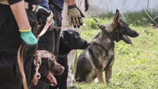 Dogs of war find new Afghanistan home after being left behind after US withdrawal