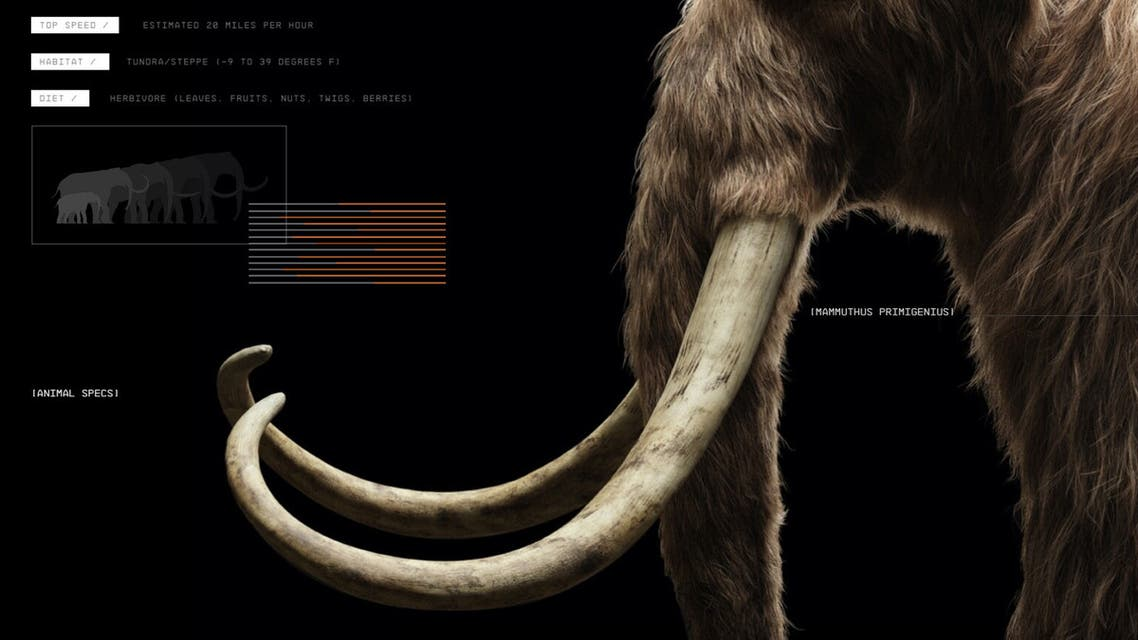 """A start-up company called Colossal aims for the """"de-extinction"""" of the woolly mammoth. (Colossal)"""