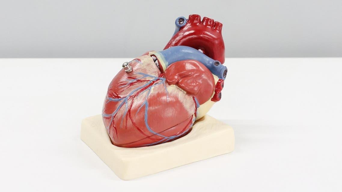 Anatomical human heart model. (Unsplash, Ali Hajiluyi)