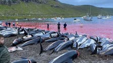 Anger rages in Denmark's Faroe Islands after 1,400 dolphins slaughtered in one day