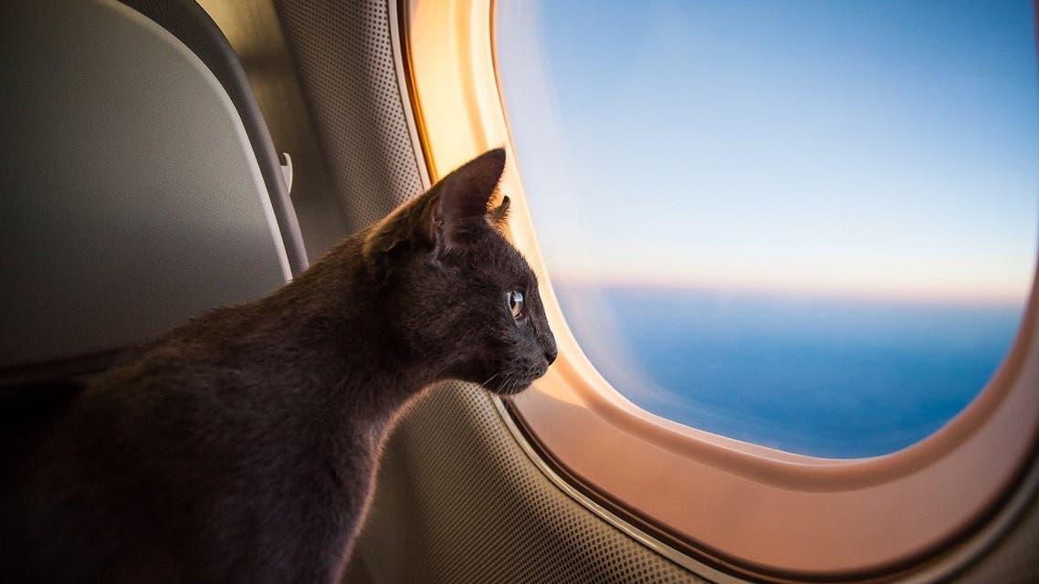 Cat flying in the plane. (GummyBone via iStock)