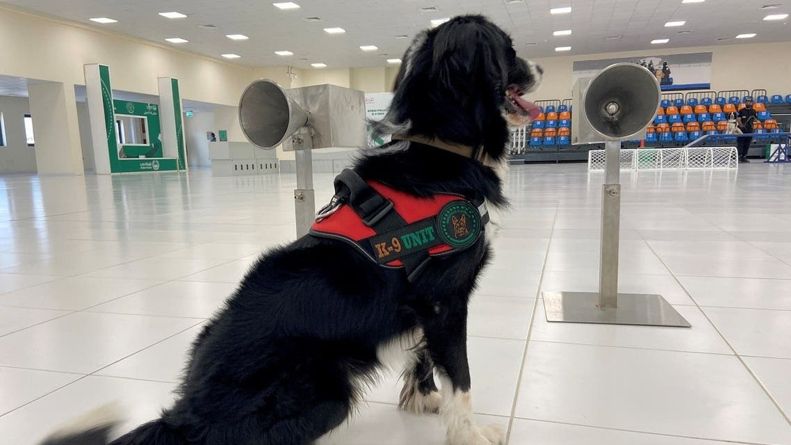 A dog that has been trained by Dubai Police K-9 unit to sniff out COVID-19 is pictured in Dubai, United Arab Emirates, September 13, 2021. (Reuters/Abdel Hadi Ramahi)