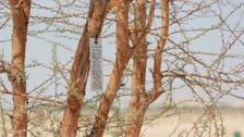 Abu Dhabi begins numbering historical, endangered local trees
