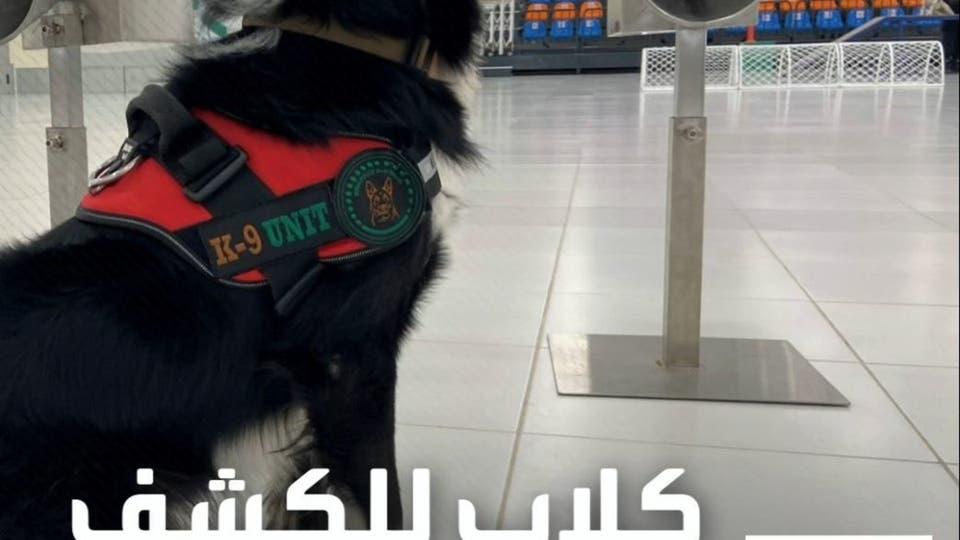 باستخدام حاسة الشم.. كلاب تكشف عن كورونا في مطارات دبي