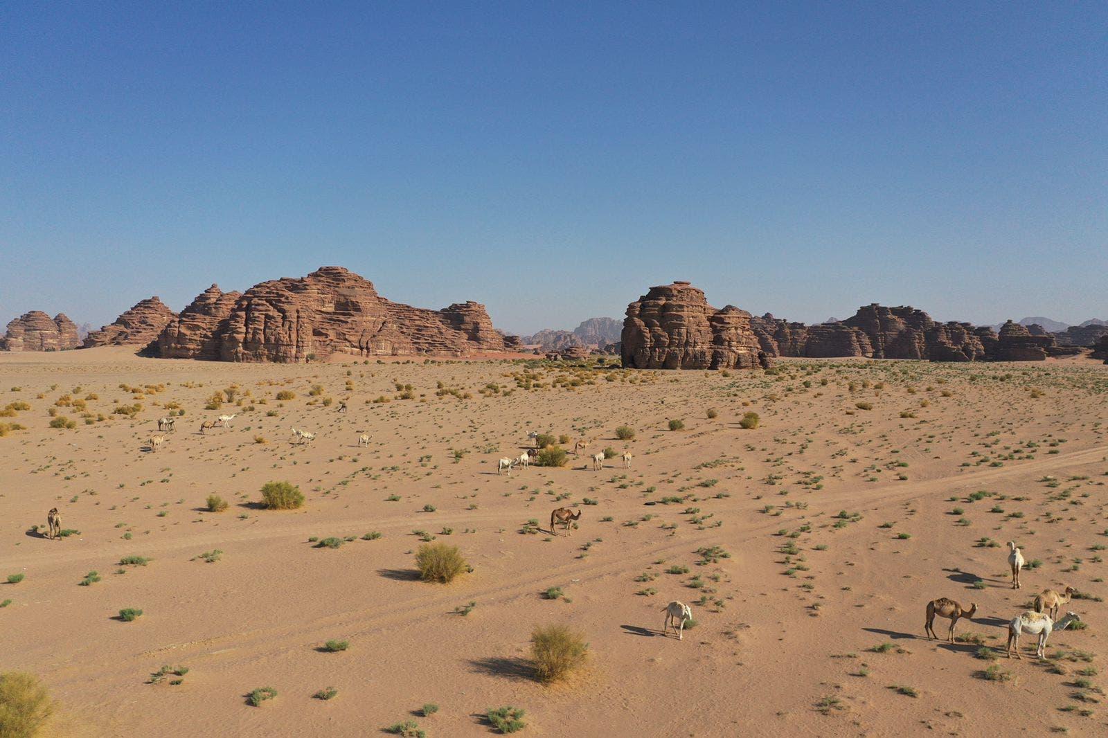 جبال بجده تعانق الصحراء