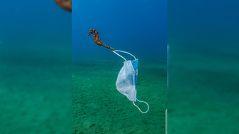 Photo of seahorse dragging a mask wins award, reveals troubling pollution reality