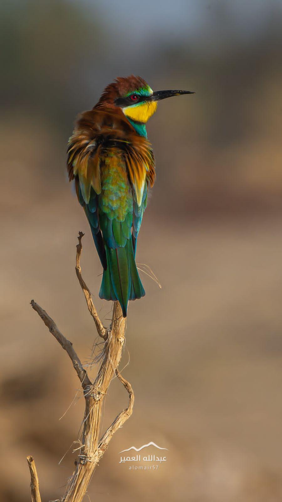 تصوير عبدالله العمير  2