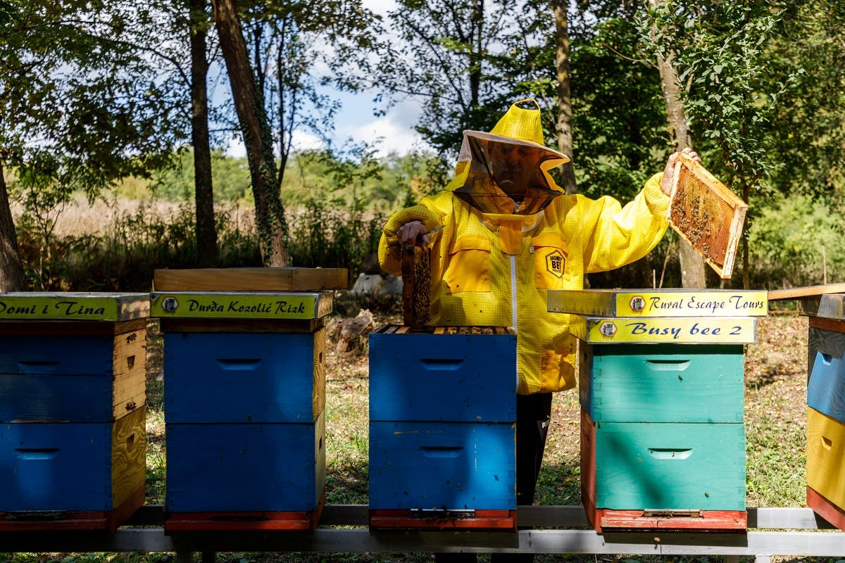 """Beekeeper and owner Domagoj Balja inspects the hives in """"Bee hotel with five stars"""" in Garesnica, Croatia, August 23, 2021. (Reuters/Antonio Bronic)"""