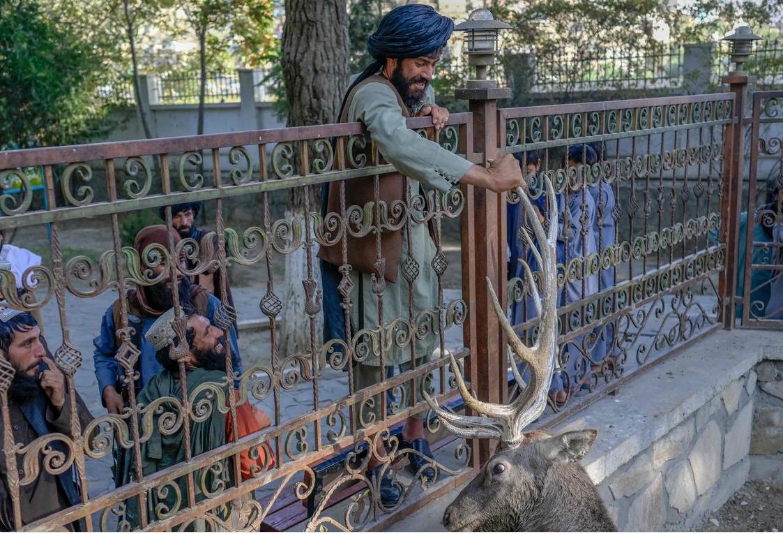 أحد عناصر طالبان يلهو مع الغزال في حديقة للحيوانات