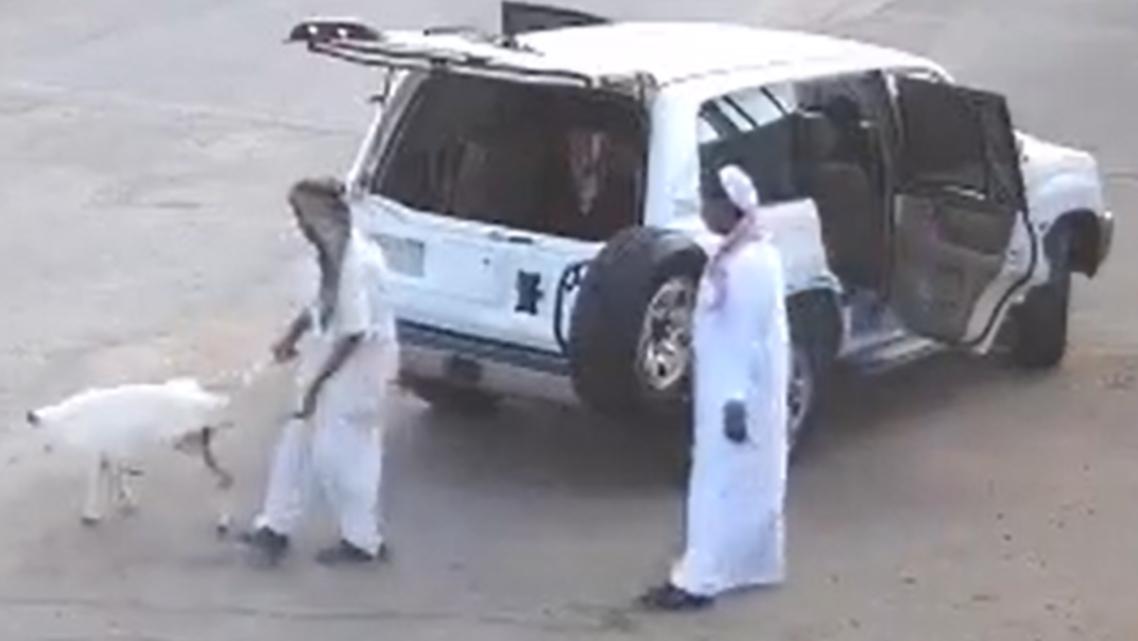 سرقة خروف في الرياض