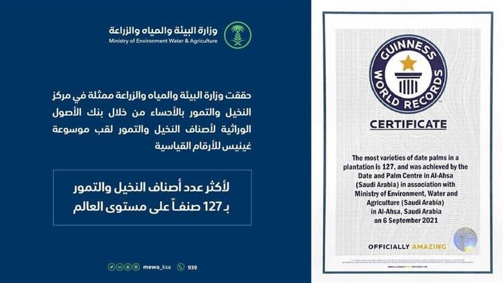 سعودی عرب: الاحسا کی 127 اقسام کی کھجوریں گینز بک میں شامل