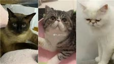 China kills three house cats that tested positive for coronavirus