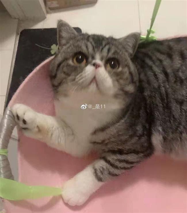 صورة متداولة لإحدى القطط التي تم قتلها