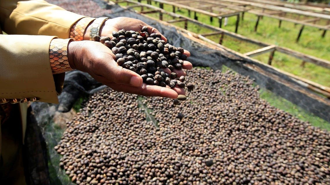 A worker holds coffee berries as they to sundry at the Bradegate coffee factory in Karatina near Nyeri, Kenya June 3, 2021. (Reuters)