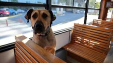 Wandering dog is Istanbul commuters' best friend