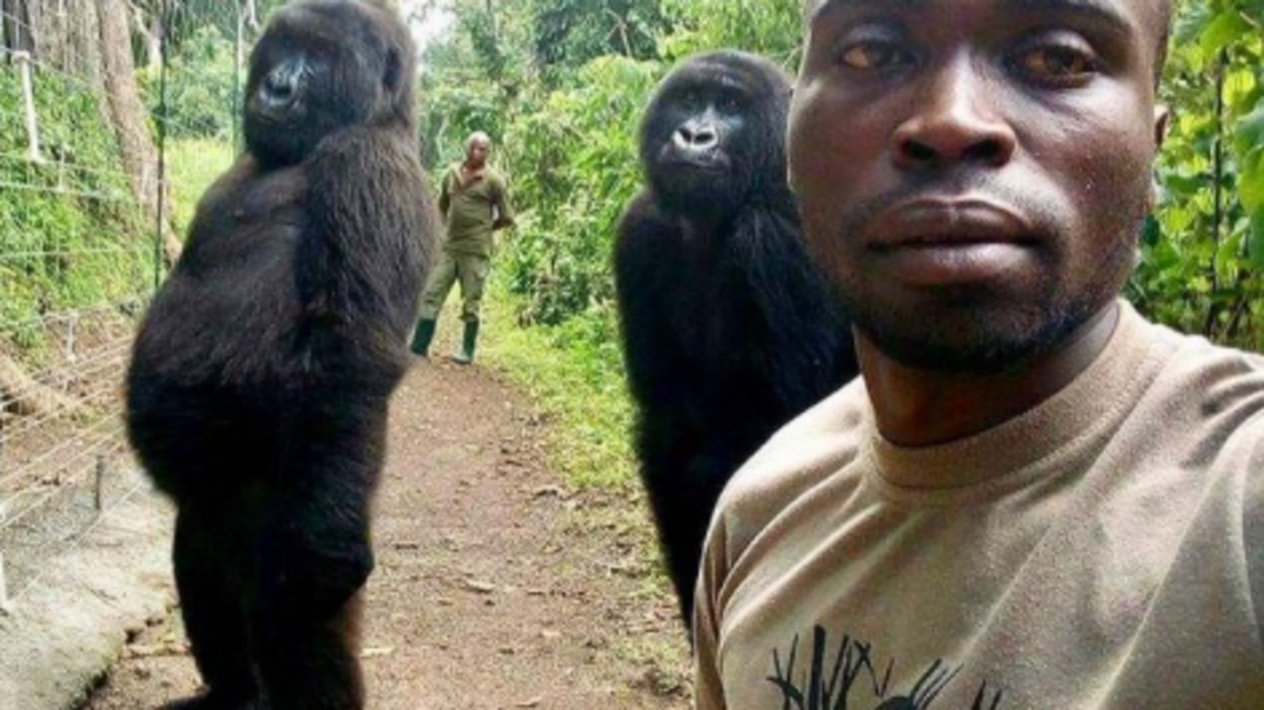 Ndakasi, a mountain gorilla made famous from this 2019 selfie, died at the age of 14. (Instagram)