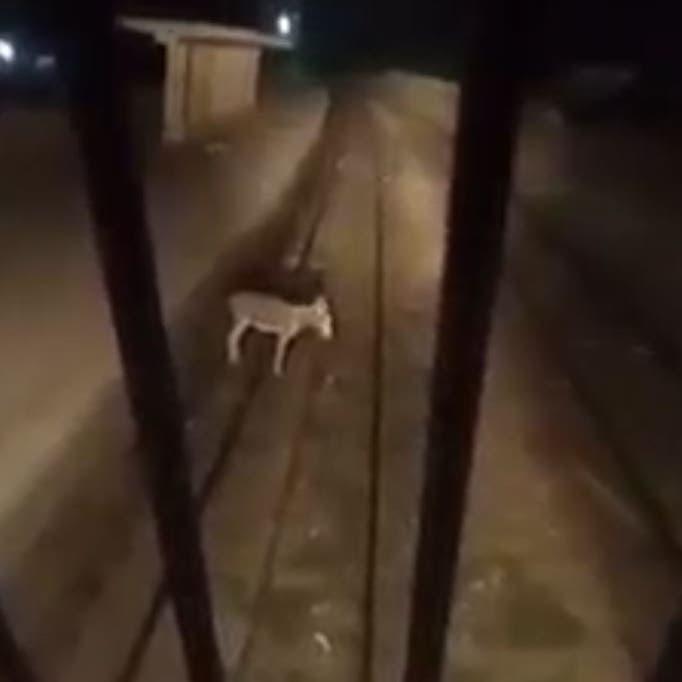 شاهد.. قائد قطار مصري يوقف رحلته لأغرب سبب