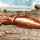 راز چشمان بسیار بزرگ ماهی مرکب غولآسا