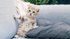 Expert says cats should not be left alone for more than 24 hours, here's why
