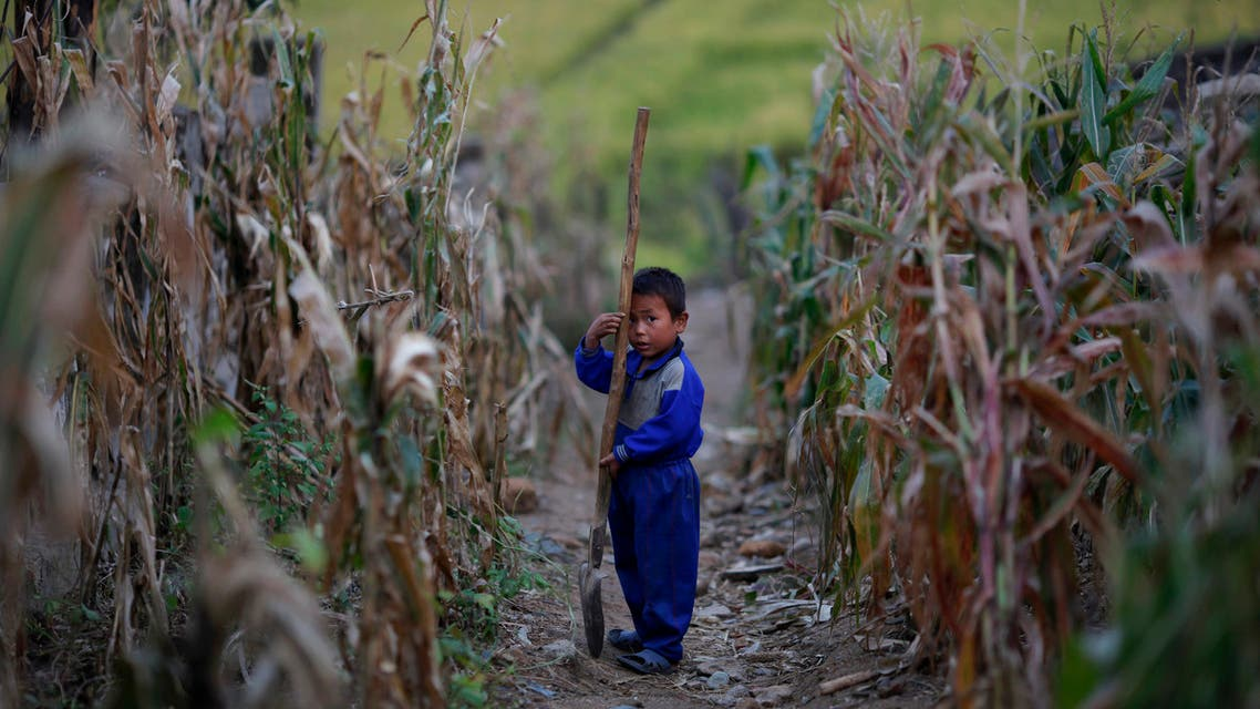 A North Korean boy holds a spade in a corn field in area damaged by recent floods and typhoons in the Soksa-Ri collective farm in the South Hwanghae province September 29, 2011. (File photo: Reuters)