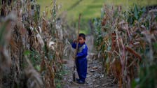UN human rights report warns of North Korea 'starvation risk'