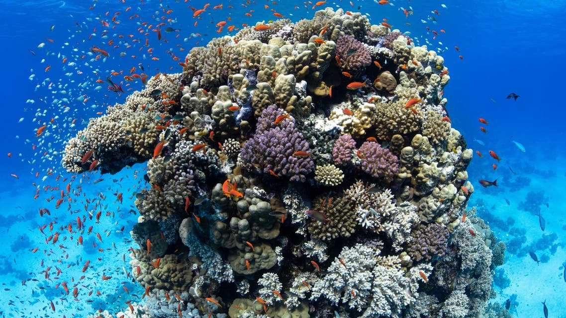 A six-week Red Sea expedition in Saudi Arabia's NEOM generated scientific research into marine ecosystems, megafauna, brine pools and coral reef conservation and regeneration. (Supplied)