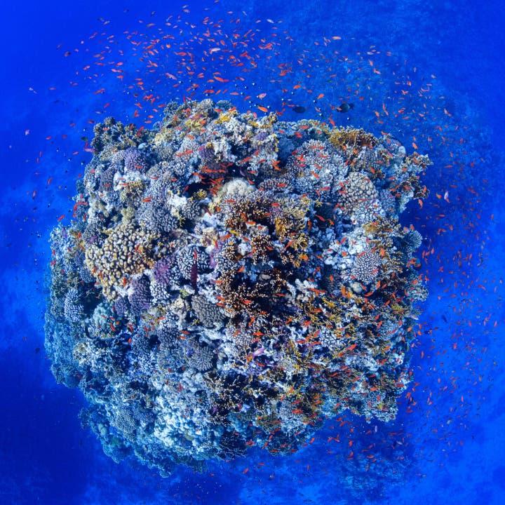 ماذا يوجد في نيوم؟.. كائنات عملاقة نادرة وجزر جديدة!