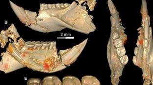 مفاجآة.. جد للفئران استوطن مصر قبل 34 مليون عام