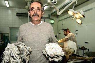 Plastic bags kill hundreds of camels: UAE vet