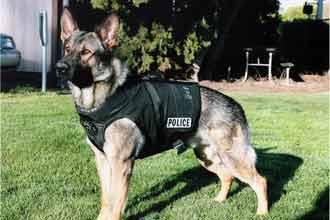 UK officer transferred for calling his dog 'Allah'