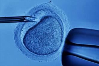 Artificial insemination booms in Bahrain