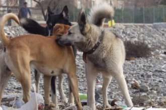 """الكلاب الشاردة تفرض """"منعًا للتجول"""" في العاصمة السورية"""