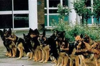 Iraqi cops use US sniffer dogs to hunt militants