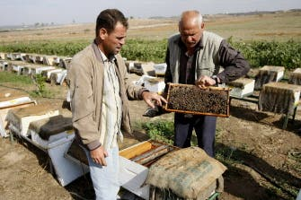 Bees provide pain relief in beleaguered Gaza
