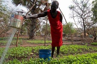 """""""الساج"""".. هدية ثمينة قدمها الاستعمار البريطاني لجنوب السودان"""