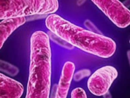 """مضاد حيوي جديد أكثر فعالية في محاربة جرثومة """"كلوستريديوم ديفيسيل"""""""