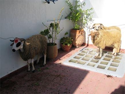 المغاربة في عيد الأضحى.. احتفالية جماعية بالخروف في طقوس محلية متوارثة