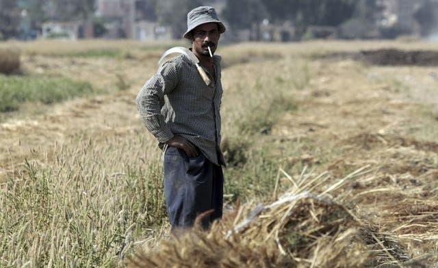 Crops damaged by fuel shortages despite Mursi's promises, say Egypt farmers