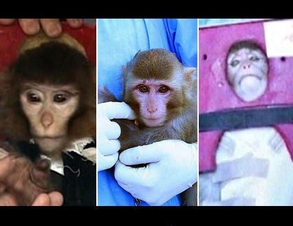 """صور تؤكد أن """"القرد الفضائي الإيراني"""".. مجرد خدعة"""